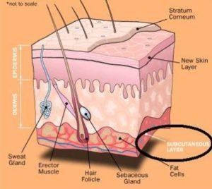 subcutaneous-fat