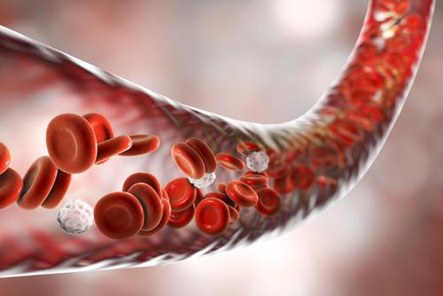 red blood cells flowing inside blood vessel