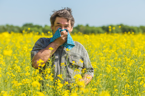 man in field covers nose from pollen allergy