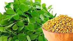 Fenugreek (Trigonella Foenum-gracum)