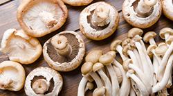 Mushroom extract